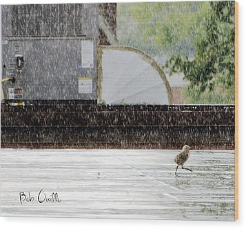 Baby Seagull Running In The Rain Wood Print by Bob Orsillo