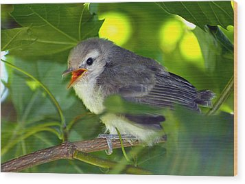 Baby Sparrow In The Maple Tree Wood Print by Karon Melillo DeVega