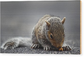 Baby Squirrel Gets A Snack Wood Print