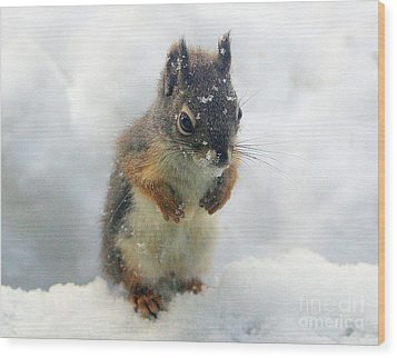 Baby Squirrel Wood Print