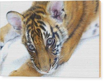 Baby Tiger Wood Print by Steve McKinzie