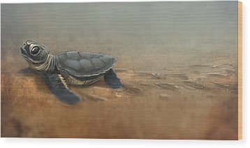 Baby Turtle Wood Print by Aaron Blaise