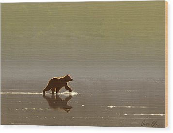 Back Lit Grizzly Wood Print