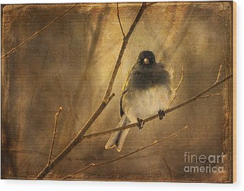 Backlit Birdie Being Buffeted  Wood Print by Lois Bryan