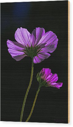 Wood Print featuring the photograph Backlit Blossoms by Marty Saccone