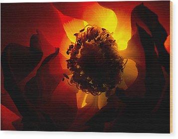 Backlit Flower Wood Print by Fabrizio Troiani