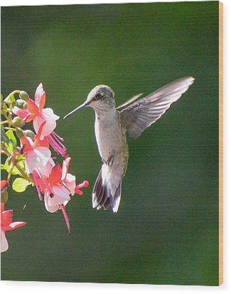 Backlit Fuchsia And Hummer Wood Print