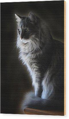 Backlit Kitty Wood Print by Carolyn Fletcher