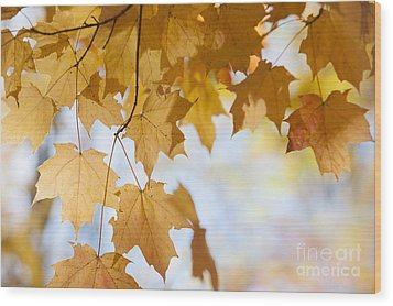 Backlit Maple Leaves In Fall Wood Print by Elena Elisseeva