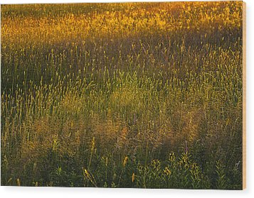 Wood Print featuring the photograph Backlit Meadow Grasses by Marty Saccone