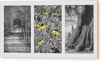 Backwoods Escape Triptych Wood Print by Carolyn Marshall
