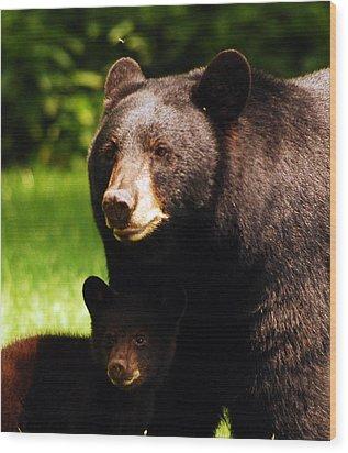 Backyard Bears Wood Print by Lori Tambakis