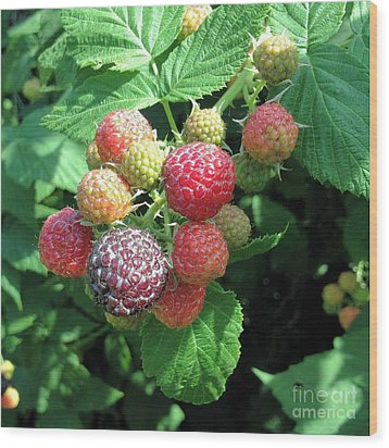 Wood Print featuring the photograph Fruit- Black Raspberries - Luther Fine Art by Luther Fine Art