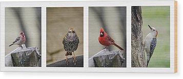 Backyard Bird Set Wood Print by Heather Applegate