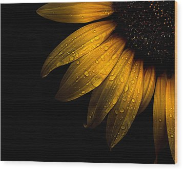 Backyard Flowers 28 Sunflower Wood Print by Brian Carson