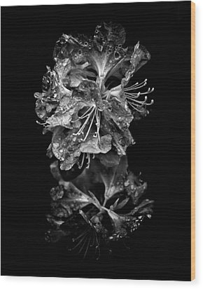 Backyard Flowers In Black And White 1 After The Storm Wood Print by Brian Carson