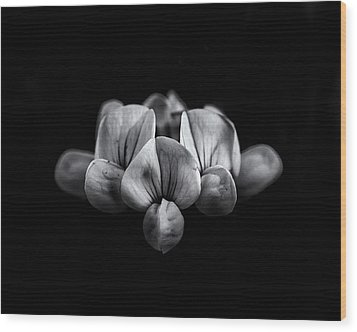 Backyard Flowers In Black And White 5 Wood Print