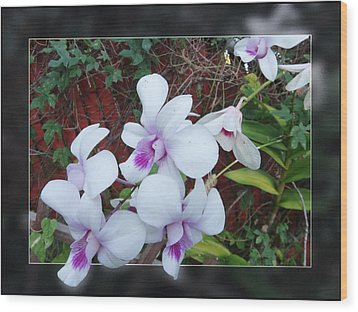 Wood Print featuring the photograph Backyard Orchid Two by Ginny Schmidt