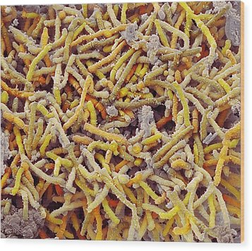Bacteria In Bird Droppings, Sem Wood Print by Science Photo Library