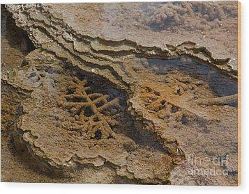 Bacterial Mat 8 Wood Print by Dan Hartford