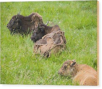 Bison Bad Fur Day Wood Print