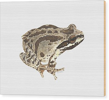 Baja California Treefrog Wood Print