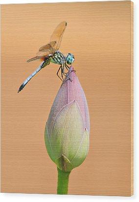 Balance Of Nature Wood Print