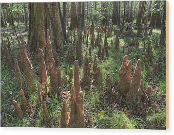 Bald Cypress Knees In Congaree National Park Wood Print by Pierre Leclerc Photography
