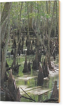 Bald Cypress Trees Wood Print by Jeanne Kay Juhos