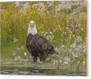 Wood Print featuring the photograph Bald Eagle @ Lunch  by Trace Kittrell