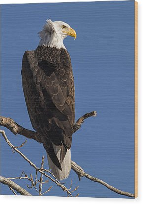 Wood Print featuring the photograph Bald Eagle 1 by Rob Graham