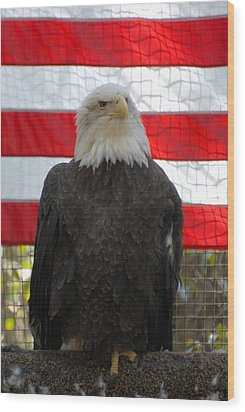 Bald Eagle 265 Wood Print by Joyce StJames