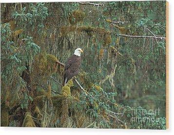 Bald Eagle Wood Print by Art Wolfe