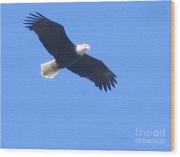 Bald Eagle At Lake Rowena Wood Print by Jeffrey Koss