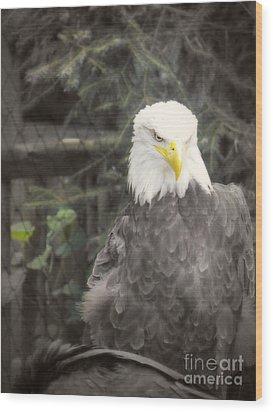 Bald Eagle Wood Print by Dawn Gari