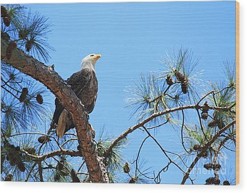 Bald Eagle Wood Print by Geraldine DeBoer