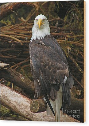 Bald Eagle I Wood Print by Chuck Flewelling