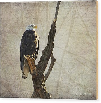 Bald Eagle Keeping Watch In Illinois Wood Print by Luther Fine Art