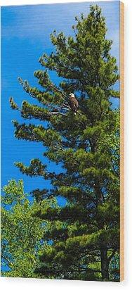 Bald Eagle   Wood Print by Lars Lentz