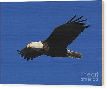 Bald Eagle Lock 14 Wood Print