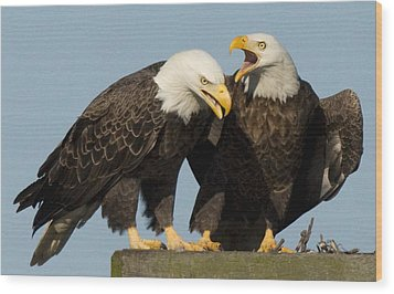 Bald Eagle Pair Wood Print