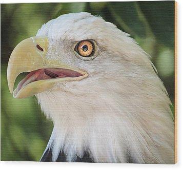 American Bald Eagle Portrait - Bright Eye Wood Print by Patti Deters
