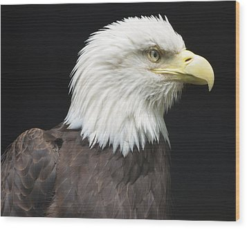 Bald Eagle Profile 2 Wood Print by Richard Bryce and Family