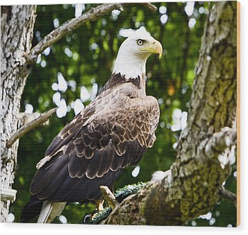Wood Print featuring the photograph Bald Eagle by Ricky L Jones