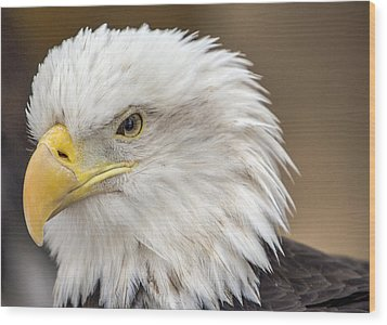 Wood Print featuring the photograph Bald Eagle by Robert  Aycock