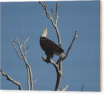 Bald Eagle Talking Wood Print