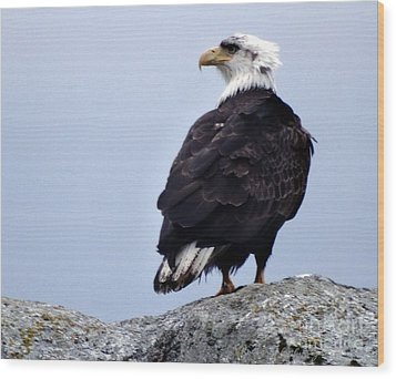 Bald Eagle Watching Wood Print by Gena Weiser