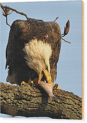 Bald Eagle With Fish 2 Wood Print by Angel Cher