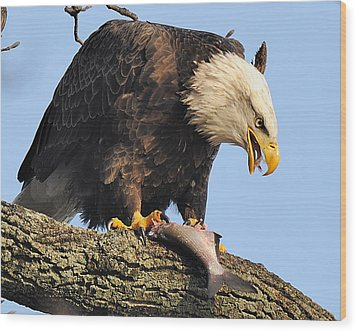 Bald Eagle With Fish Wood Print by Angel Cher