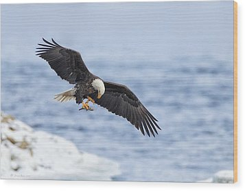 Bald Eagle With Prey Wood Print by Daniel Behm
